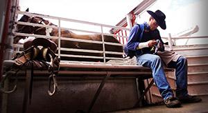 Cowboy behind chutes