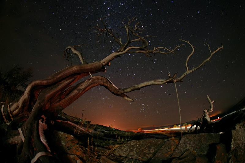 Burmis Tree Photo