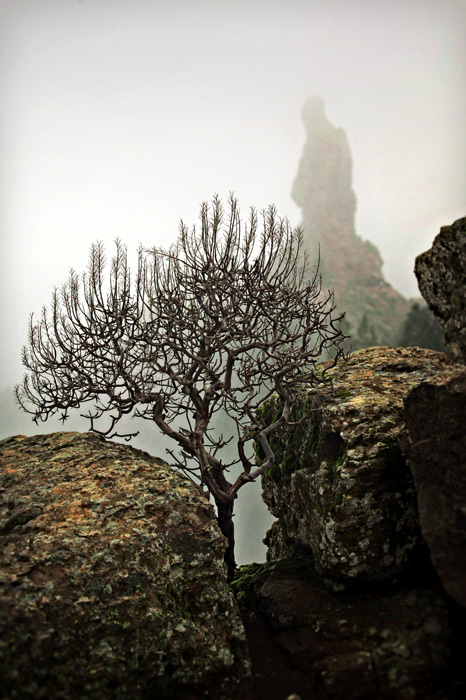El Monk by Roque Nublo Photo